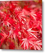 Red Red Red Metal Print by Anne Gilbert