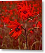 Red Red Wild Flowers Metal Print