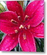 Red Refreshed Lily Metal Print