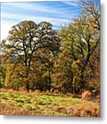 Red River Valley Metal Print
