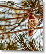 Red Rock Country Hummingbird Metal Print
