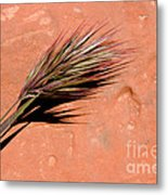 Red Rock In Arizona Metal Print