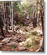 Red Rock Pine Forest Metal Print