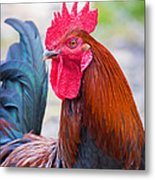 Red Rooster Metal Print