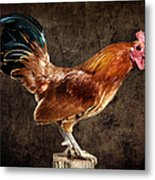 Red Rooster On Fence Post Metal Print