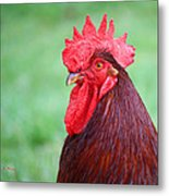 Red Rooster Portrait Metal Print