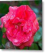 Savannah Ga Red Rose After A Rain Metal Print