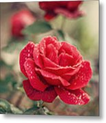 Red Rose After Rain Metal Print by Diana Kraleva