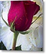 Red Rose And Kale Flower Metal Print
