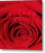 Red Rose And Water Drops Metal Print