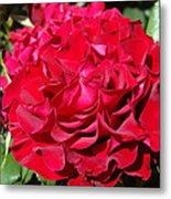 Red Rose Art Prints Big Roses Floral Metal Print