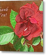Red Rose Autumn Texture Thank-you  Metal Print