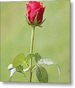Red Rose Bud 1 Metal Print