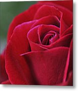 Red Rose Close 1 Metal Print by Roger Snyder