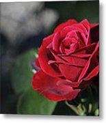 Red Rose Dark Metal Print by Roger Snyder