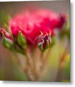 Red Rose Flourish Metal Print