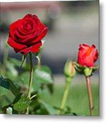 Red Rose Flower Metal Print