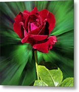 Red Rose Green Background Metal Print