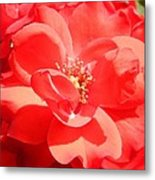 Red Rose In Full Bloom Metal Print