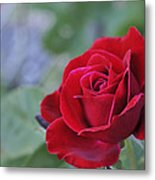 Red Rose Light Metal Print