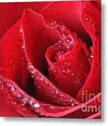 Red Rose Macro With Waterdrops Metal Print