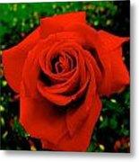 Red Rose On Green Metal Print