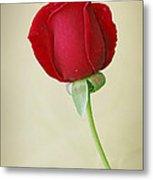 Red Rose On White Metal Print by Sandy Keeton