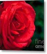 Red Rose Profile Metal Print