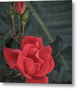 Red Rose With Bud Metal Print