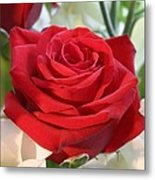 Red Rose With Garden Background  Metal Print