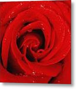 Red Rose With Water Drops Metal Print