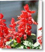 Red Salvia Brush Strokes Metal Print