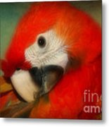 Red Scarlet   Macaw Parrot Sammy Metal Print