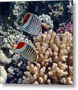 Red Sea Beauty 5 Metal Print