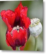 Red Sensation Metal Print