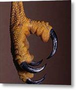 Red-shouldered Hawk Talons Metal Print