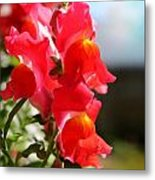 Red Snapdragons II Metal Print by Aya Murrells