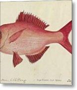 Red Snapper Fish Metal Print