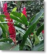 Red Spikes In St Lucia Metal Print