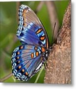 Red Spotted Purple Butterfly Metal Print