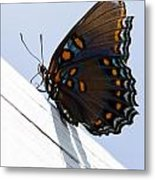 Red Spotted Purple Metal Print