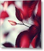 Red Spring Metal Print