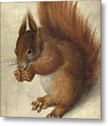 Red Squirrel  Metal Print