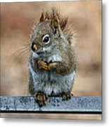 Red Squirrel On Patio Chair II Metal Print