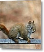 Red Squirrel On Patio Chair Metal Print