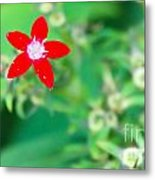 Red Star Metal Print