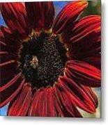 Red Sun Honey Metal Print