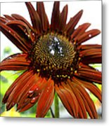 Red Sunflower After The Rain Metal Print