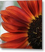 Red Sunflower Close-up Metal Print