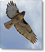 Red-tail Hawk #3094 Metal Print